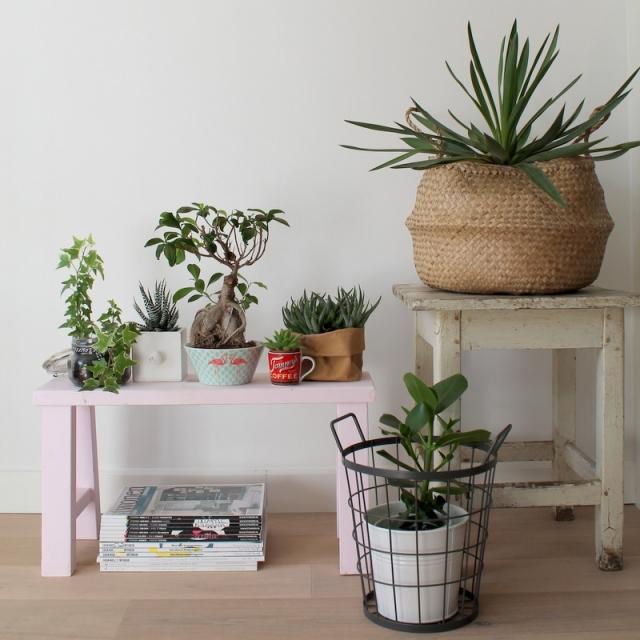 ingebruins-plantenbankje
