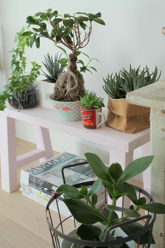 ingebruins-plantendoorkijkje