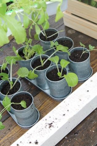 ingebruins-plantjes