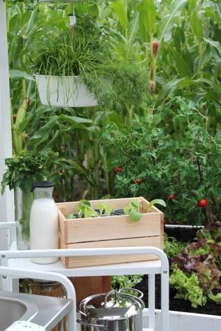 ingebruins-tomaatjes
